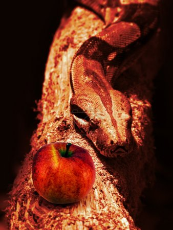 Photo for Snake and red apple - Royalty Free Image