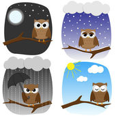 Four owls on branches in different weather and in different mood
