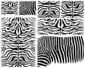 High details vector zebra skin collection