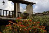 Red Poinsettia Tree Art House Patzcuaro Mexico
