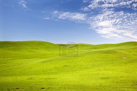 Foto de Campos de pasto de trigo verde azules cielo palouse washington estado Pacífico Noroeste - Imagen libre de derechos