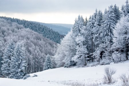 Photo for The winter forest scene. Snowy landscape. - Royalty Free Image