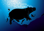 Cute swimming hippopotamus
