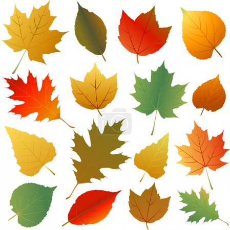 Illustration for Autumn leaves collection - Royalty Free Image