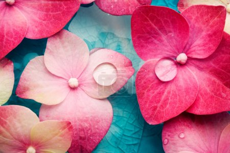 Photo for Bowl of water with pink hortensia petals - Royalty Free Image