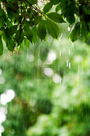 Photo pour Jour de pluie - image libre de droit