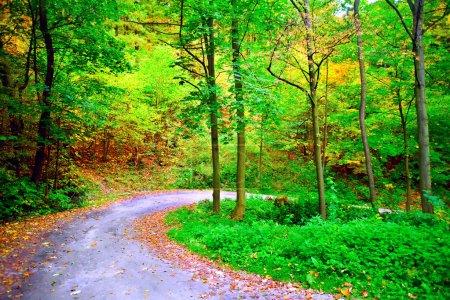 Photo pour Photographie de la route sinueuse dans la forêt automnale - image libre de droit