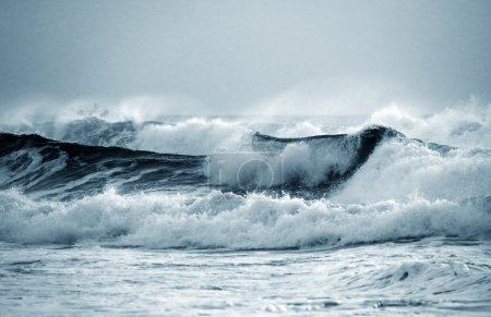 Photo pour Grosse vague se brise sur le rivage. océan Indien - image libre de droit