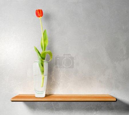 Red tulip on wooden shelf