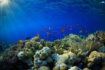 Photo pour Belle colonie de poissons rouges - image libre de droit