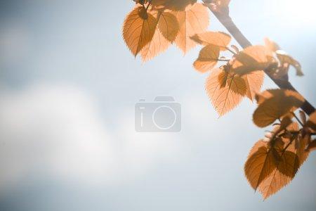 Autumn leaves against blue sky