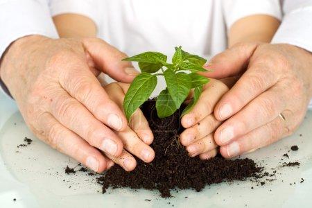 Photo pour Jeunes et moins jeunes mains protégeant une plante - le concept d'éducation à l'environnement - image libre de droit