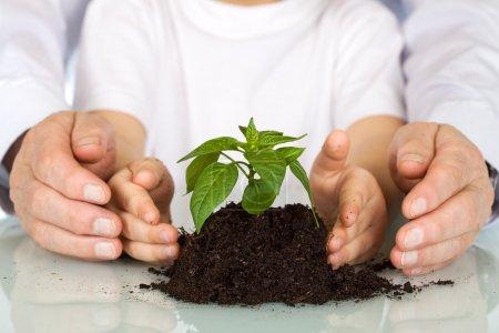 Photo pour Planter un semis concept aujourd'hui - environnement et l'éducation avec des mains jeunes et vieux, protéger un nourrisson - image libre de droit