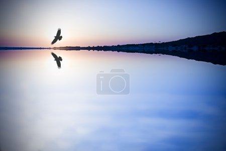 Bird silhouette on the horizon