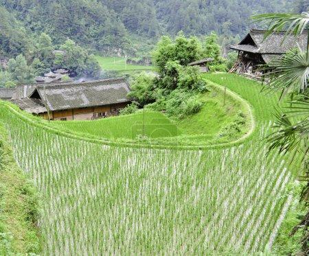 Rice Terrace village