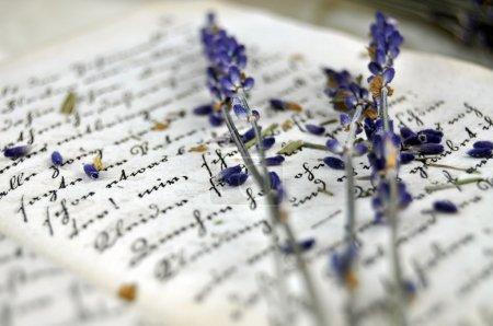 Foto de Lavanda seca en un viejo libro closeup - Imagen libre de derechos