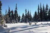 Trees poking through deep snow