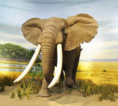 "Постер, картина, фотообои ""африканский слон"""
