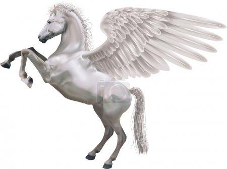 rearing pegasus horse illustration