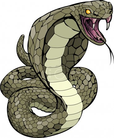 Cobra snake about to strike illustration