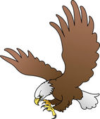 Illustration of bald eagle with spread wings