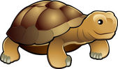 Cute tortoise vector illustration