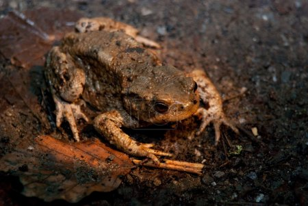 Toad Being Paralysed While Crossing Road