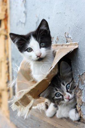 Two funny homeless playful kitten