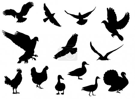 Illustration for Birds on the white background - Royalty Free Image