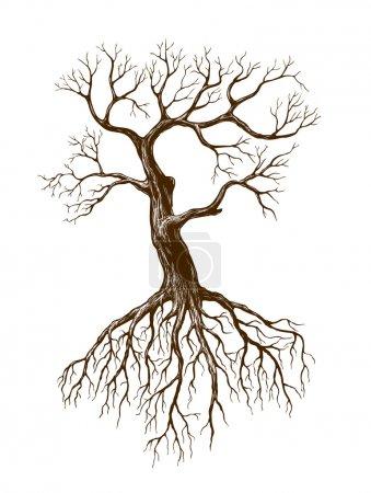 Stare drzewo