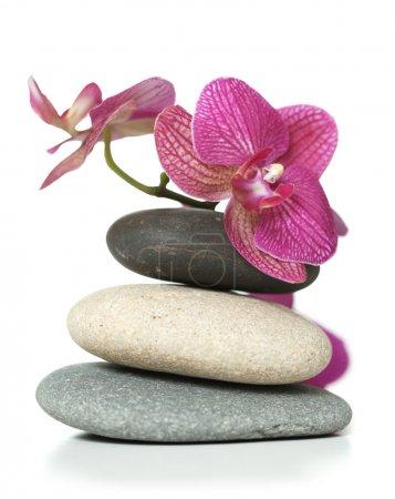 Photo pour Orchidée portant sur les pierres - image libre de droit