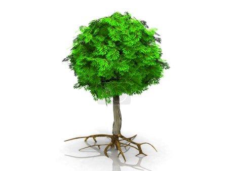 Photo pour Un arbre vert sur fond blanc - image libre de droit