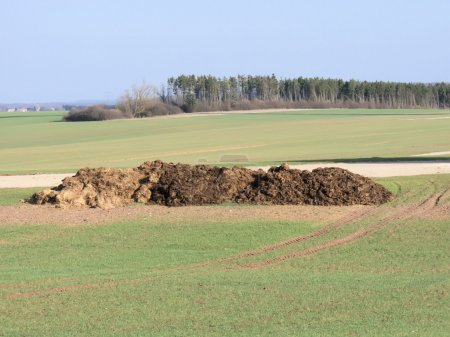The manure in the fields...
