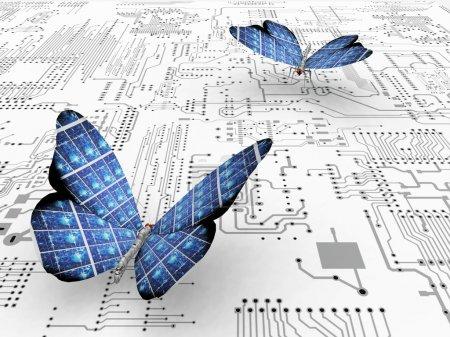 Foto de Las hermosas mariposas con alas - Imagen libre de derechos