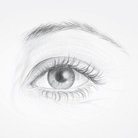 Illustration for Realistic sketch of beautiful woman eye - Royalty Free Image