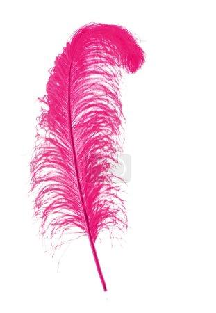 Photo pour Grande Plume rose sur fond blanc - image libre de droit