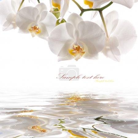 Photo pour Carte postale. orchidées blanches sur l'eau - image libre de droit
